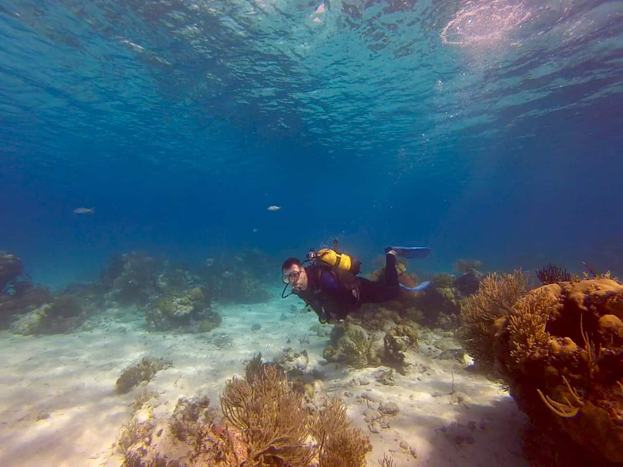 A diver enjoys crystal clear water and soft corals in the Bay of Pigs in Cuba.