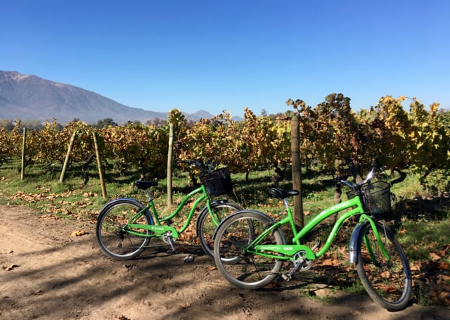 Green bikes parked next to vineyards on a Bike and Wine Tour of the Maipo Valley in Santiago.