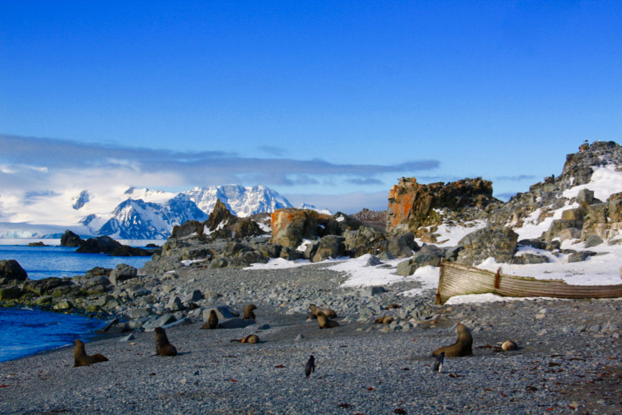 Half Moon Island, our first stop in Antarctica