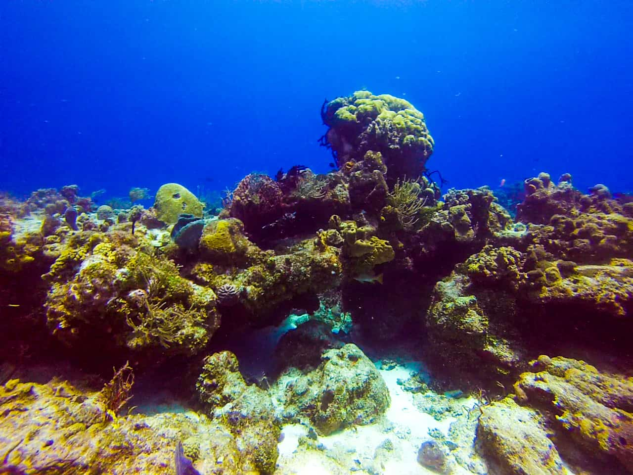 Aquatic adventures diving in cozumel two for the world - Cozumel dive sites ...