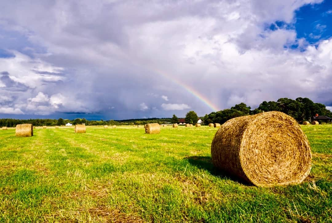 A rainbow falls over a field of hay bales on the road to Skye.