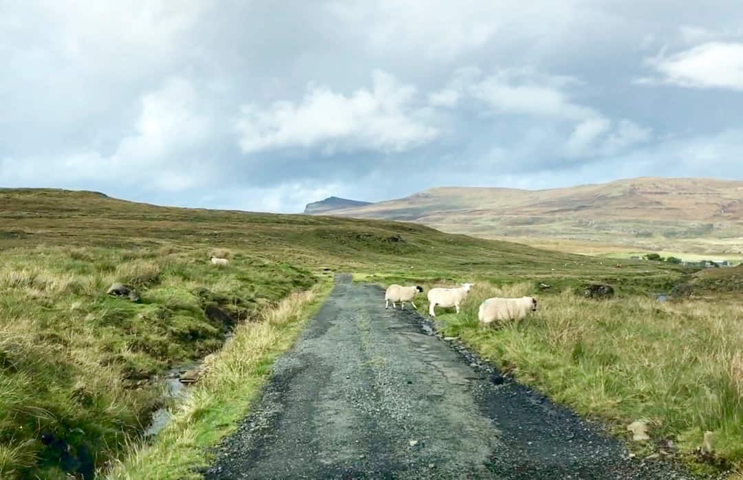 Sheep are a common sight on the roads around Skye.